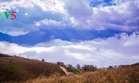 Daerah Tay Bac pada musim awan – surga di bumi