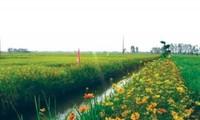 """Pola """"Sawah padi, pematangnya ditanami bunga  turut melakukan produksi pertanian secara berkesinambungan"""