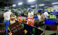 Provinsi Phu Tho mengembangkan keunggulan untuk memperhebat pengembangan produksi industri