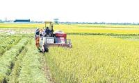 Provinsi Thai Binh mengembangkan ekonomi pertanian