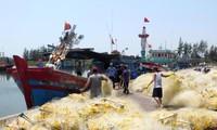 Kota Da Nang memperkuat usaha mencari asal-usul hasil perikanan