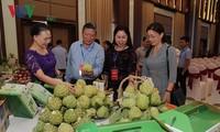 Provinsi Son La memperhebat ekspor hasil pertanian bersih dan aman.