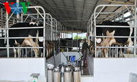 Mengembangkan pertanian yang menerapkan teknologi tinggi di Provinsi Son La