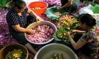 Teh beraroma teratai Danau Tay – Intisari orang Kota Hanoi