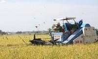 АБР призывает сократить торговые барьеры в отношении риса