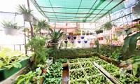 Тенденция выращивания овощей на городских крышах