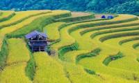 Террасные рисовые поля Хоангшуфи – шедевр искусства малых народностей Вьетнама