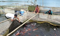 Ликвидация бедности в разных районах Вьетнама