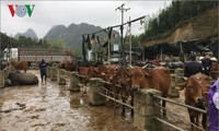 Базар рогатого скота в горном районе на севере Вьетнама