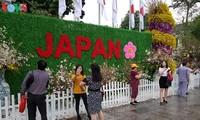 В Ханое прошёл фестиваль японской сакуры 2019 года