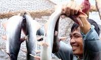 Xây dựng mô hình hợp tác xã kiểu mới tại Đồng bằng sông Cửu Long