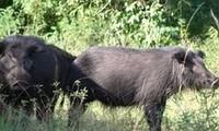 Phát hiện nhiều động vật hoang dã quí hiếm ở rừng U Minh Hạ