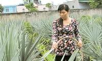 Quỹ hỗ trợ nông dân thành phố Hồ Chí Minh giúp nông dân thoát nghèo