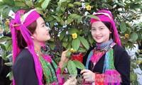 Hội trà hoa vàng ở huyện Ba Chẽ, Quảng Ninh: Quảng bá, tôn vinh cây dược liệu quý