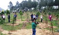 Thừa Thiên - Huế phấn đấu hoàn thành các chỉ tiêu bảo vệ và phát triển rừng năm 2018