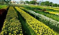Làng hoa Phù Vân phát triển nghề trồng hoa gắn với du lịch