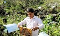 Mô hình trồng rau an toàn và nuôi ong mật giúp nông dân xóa nghèo ở tỉnh Hà Giang