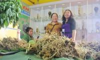 Lễ hội sâm Ngọc Linh tại  Quảng Nam