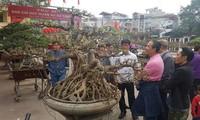 Desa Trieu Khuc akan menjadi pusat pohon hias dari Ibukota Hanoi