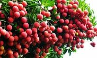 Hasil pertanian Vietnam berupaya menaklukkan pasar Perancis