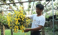 Memperkenalkan hobi main bunga anggrek di Vietnam.