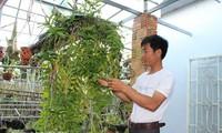 Hobi main bunga anggrek di Vietnam