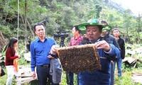 Pola penanaman sayuran aman dan pembubidayaan lebah madu membantu petani mengentas dari kemiskinan di Propinsi Ha Giang