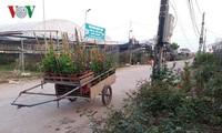 Para miliarder muda di desa bunga baru Xuan Quan