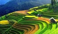 Sawah terasering di Kabupaten Hoang Su Phi- karya adi dari warga etnis-etnis minoritas