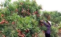 Memperkuat konektivitas kaum petani untuk berkembang