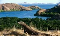Indonesia dengan sementara menutup pintu Pulau Naga Komodo