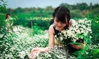 Desa-desa penghasil bunga masuk musim ke  panenan Hari Raya Tet