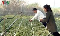 Desa Ba Na pertama di Provinsi Gia Lai  melakukan pertanian teknologi tinggi