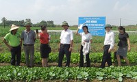 Deputy Prime Minister inspects food safety in Bac Ninh