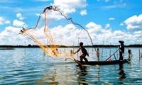 越南大米种植和水产养殖情况