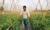 成功开展无公害蔬菜种植模式的团支部书记杜春大