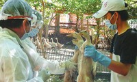 New cases of H7N9 bird flu continue to increase in China