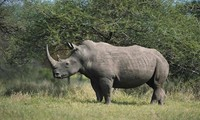 CITES member countries join hands for wildlife protection