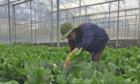 New agricultural production program launched