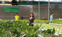 Ambitious businesswoman pioneers hydroponic vegetable growing in Can Tho