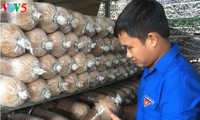 Young man profits from mushroom farming