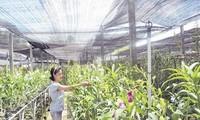 Áp dụng khoa học công nghệ vào canh tác nông nghiệp tại thành phố Hồ Chí Minh