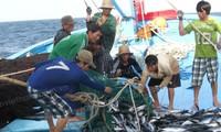 Hội Nghề cá Việt Nam phản đối lệnh cấm đánh bắt cá khu vực biển Đông