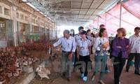 Hoa Kỳ và Việt Nam hợp tác phòng ngừa dịch bệnh và bảo vệ sức khỏe