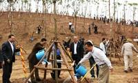 Tết trồng cây đời đời nhớ ơn Chủ tịch Hồ Chí Minh