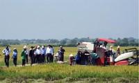 Xây dựng mô hình sản xuất cánh đồng lớn ở Ninh Thuận