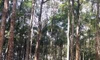 Nhân rộng mô hình liên kết nông dân để phát triển rừng bền vững