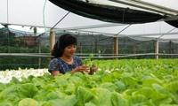 An toàn thực phẩm và một nền nông nghiệp sạch