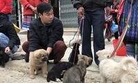Chơi chợ Bắc Hà, tìm mua chó bản địa của người Mông