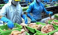 Congreso norteamericano dificulta la venta de pescados sin escamas de Vietnam